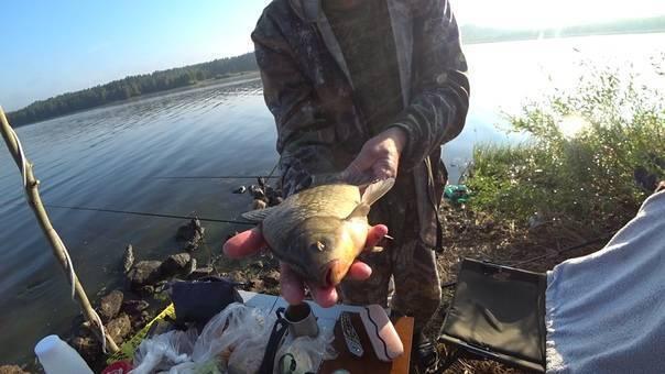 Pal'овцы под васильсурском – 2 - рабочие точки чебоксарского водохранилища - газета рыбак