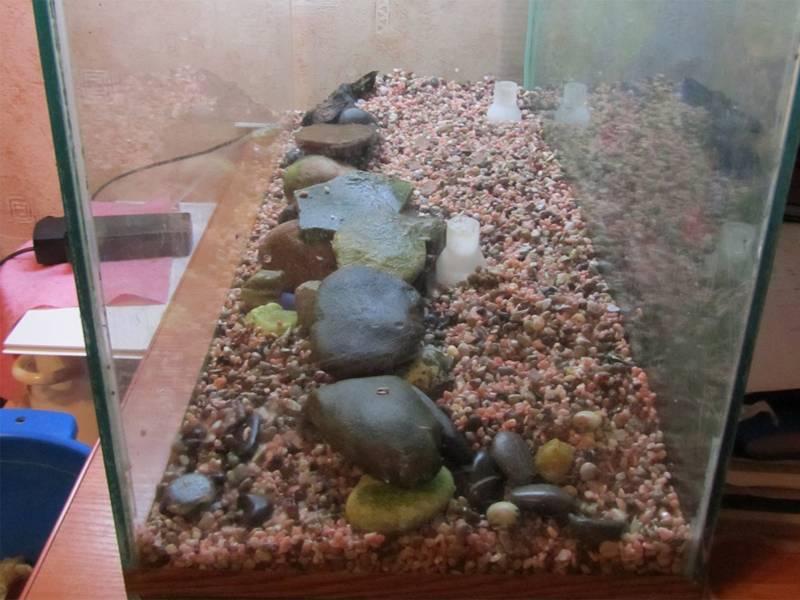 Грунт для аквариума - описание видов, как подобрать правильно натуральный и искусственный