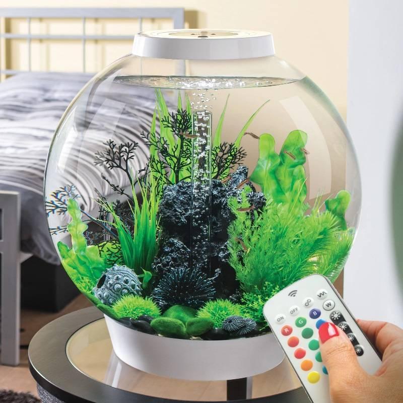Как запустить аквариум в первый раз и что будет нужно знать начинающему