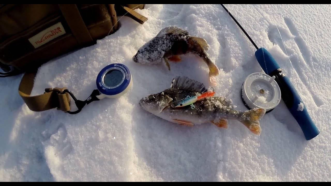 Ловля окуня по первому льду. где искать на водоеме