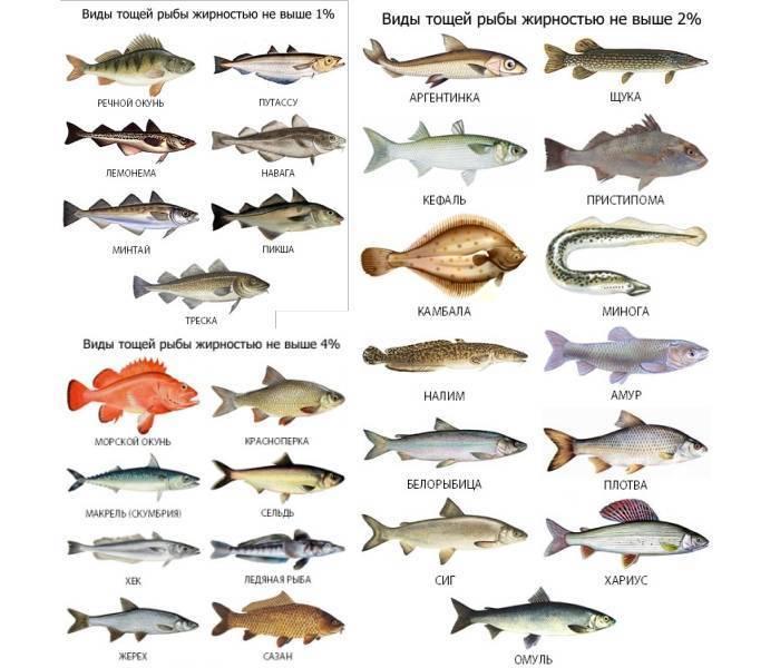Форель: речные и морские виды, распространение в мире и в россии, основные характеристики
