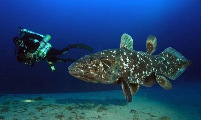 Самые интересные факты и необычные сведения о рыбах
