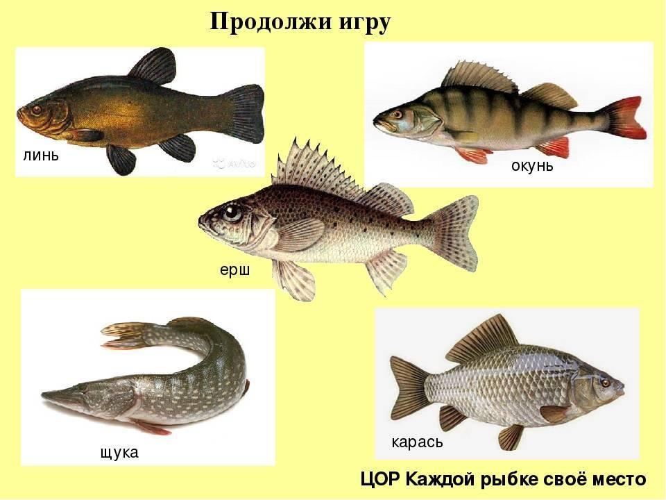 Рыбалка в июне. рыболовный календарь. рыбалка в начале июня на карпа, карася, язя, щуку, судака, окуня и сома