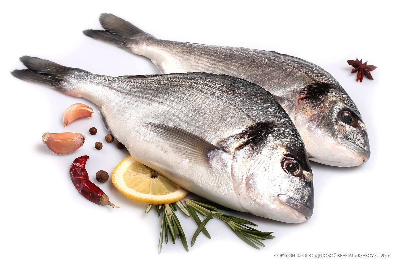 Рыба сибас или морской волк: что за рыба, описание, калорийность