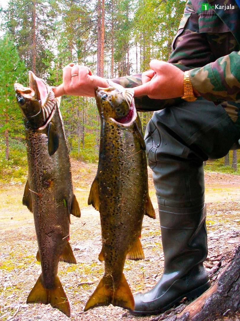 Карелия: советы и отзывы о рыбалке «дикарем»