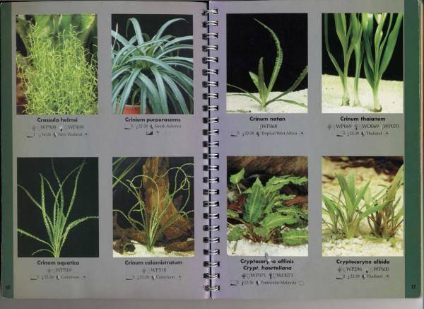 Аквариумные растения: виды, описание, фото, названия, искуственные, уход, правильный выбор, совместимость, болезни