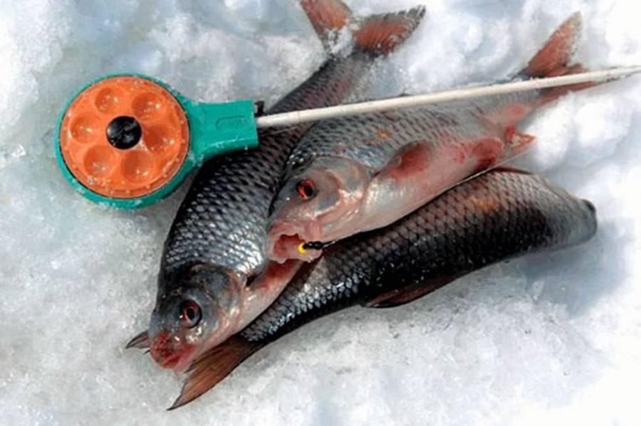 Как ловить плотву на мормышку и безмотылку зимой: техника и тактика зимней рыбалки