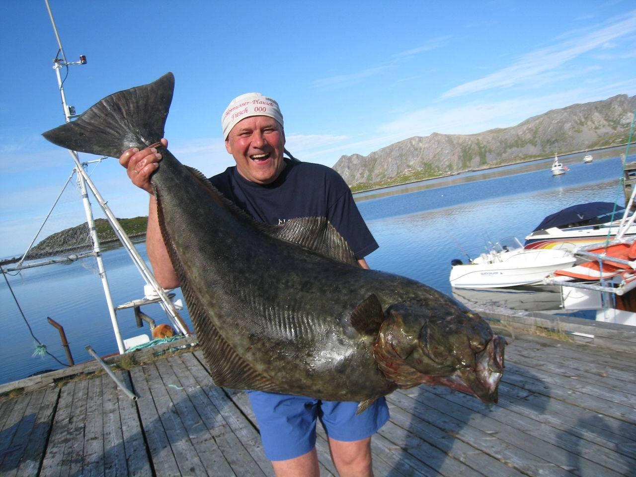 Рыба палтус: виды, где водится, как ловить в баренцевом море