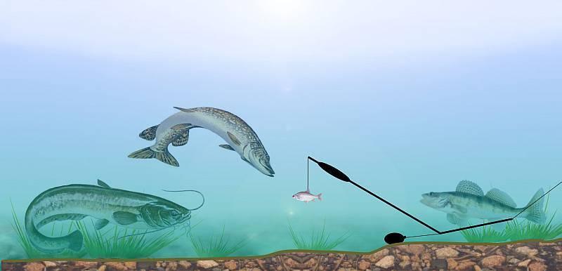 Как ловить сома на донку с берега?
