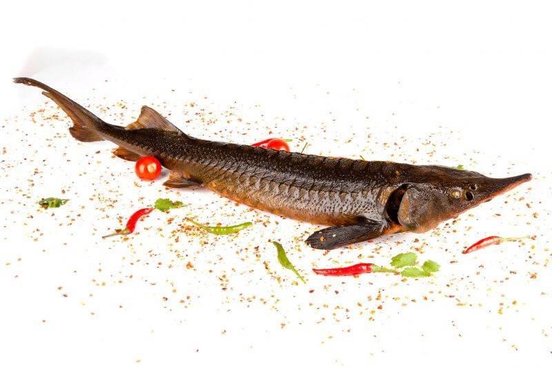 Какую рыбу называют царской, как ее можно приготовить