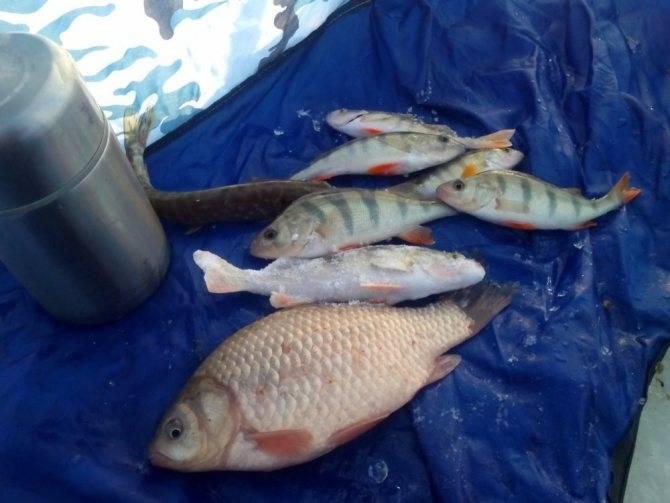 Нарские пруды - рыбалка, рыба водоемов, отзывы, цены, услуги и контакты