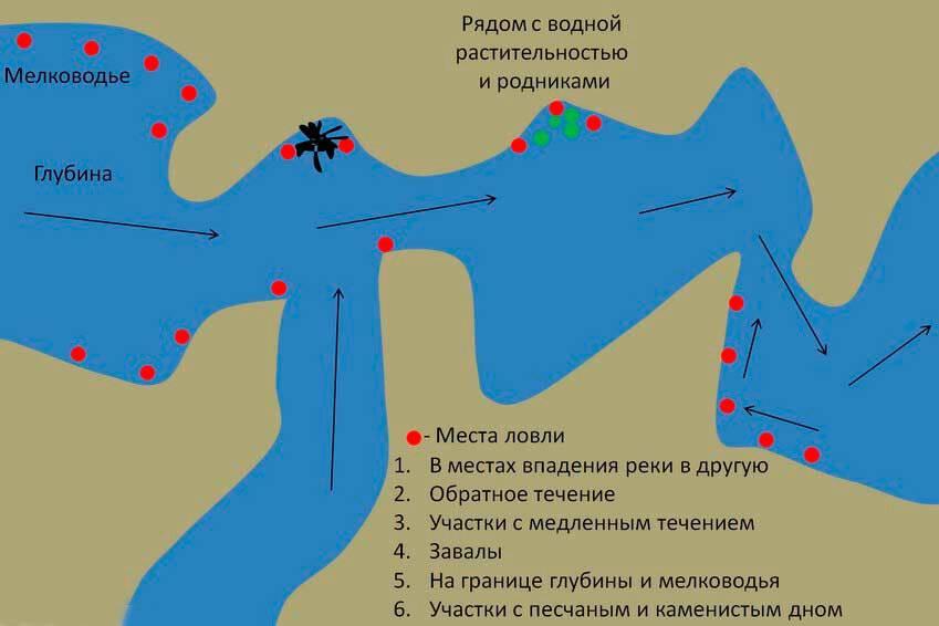 Подходящие места для летней рыбалки на различных водоёмах