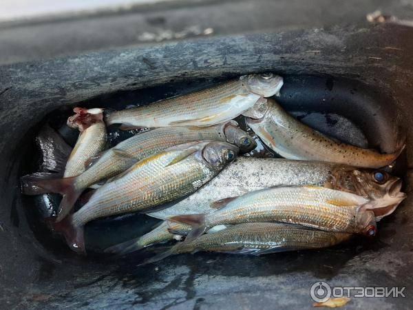 Рыбалка в приморском крае | (25) карта рыболовных мест