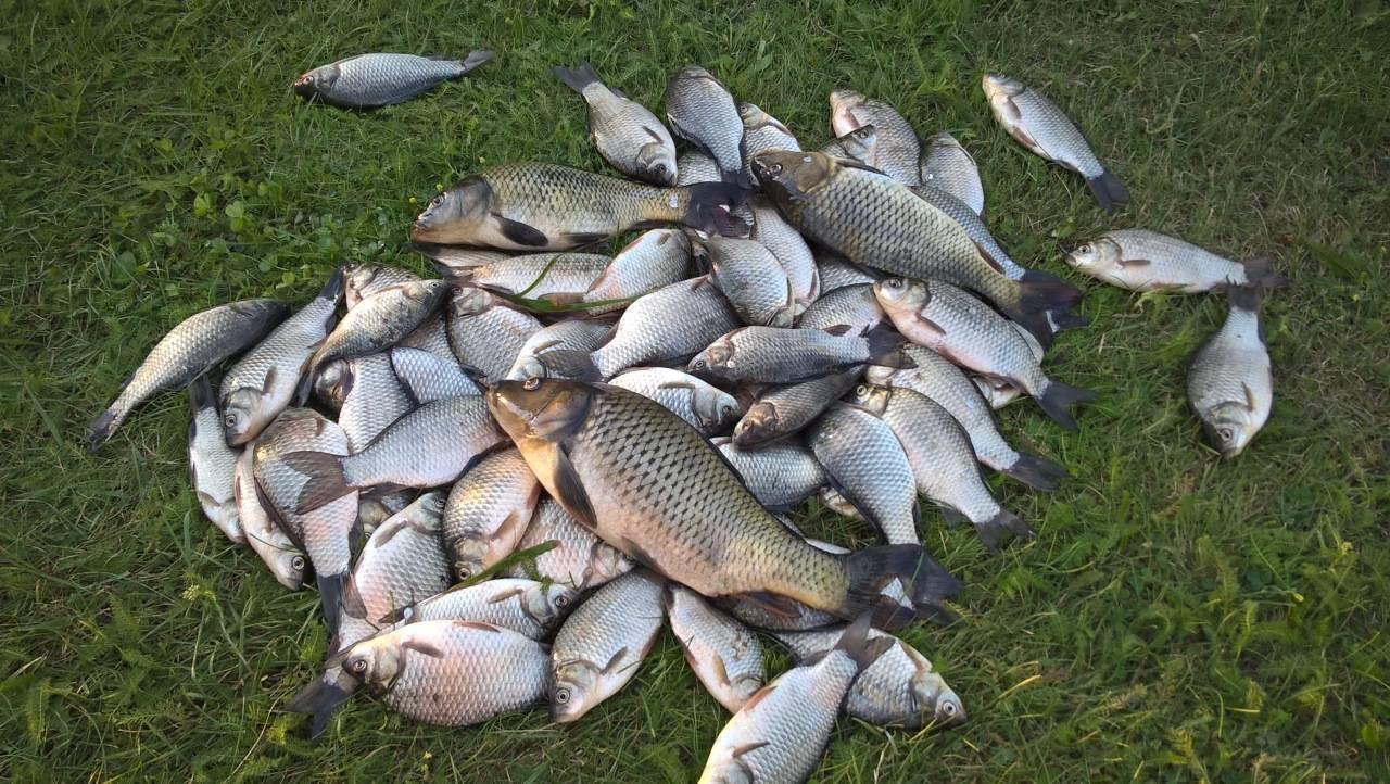 Самые рыбные места в республике адыгея и сезонный запрет