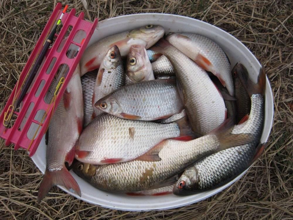 Рыбнадзор тухнет с головы? | рыбинский дневник