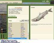 Белорыбица: что за рыба, как готовить, рецепты. блюда из белорыбицы