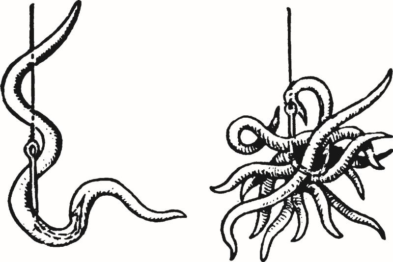 Рыбалка на червя: как правильно насаживать на крючок