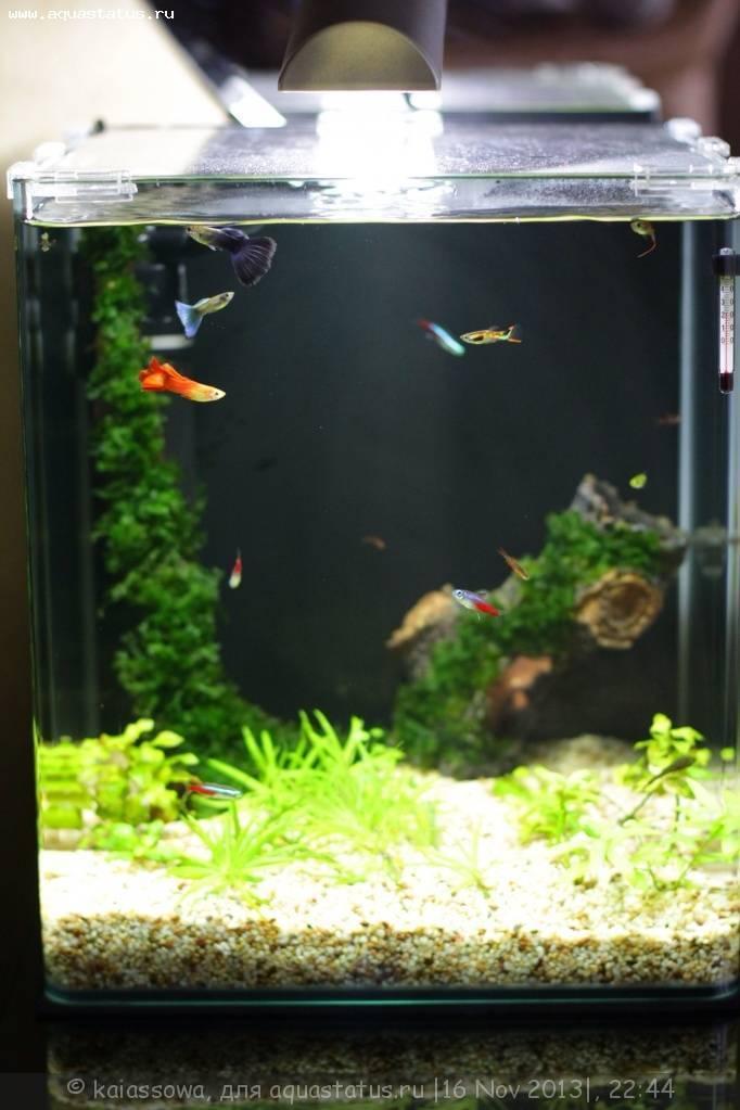 Аквариум для петушков: выбор, оборудование, заселение аквариум для петушков: выбор, оборудование, заселение