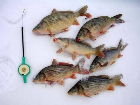 Зимняя рыбалка: особенности ловли карпа зимой