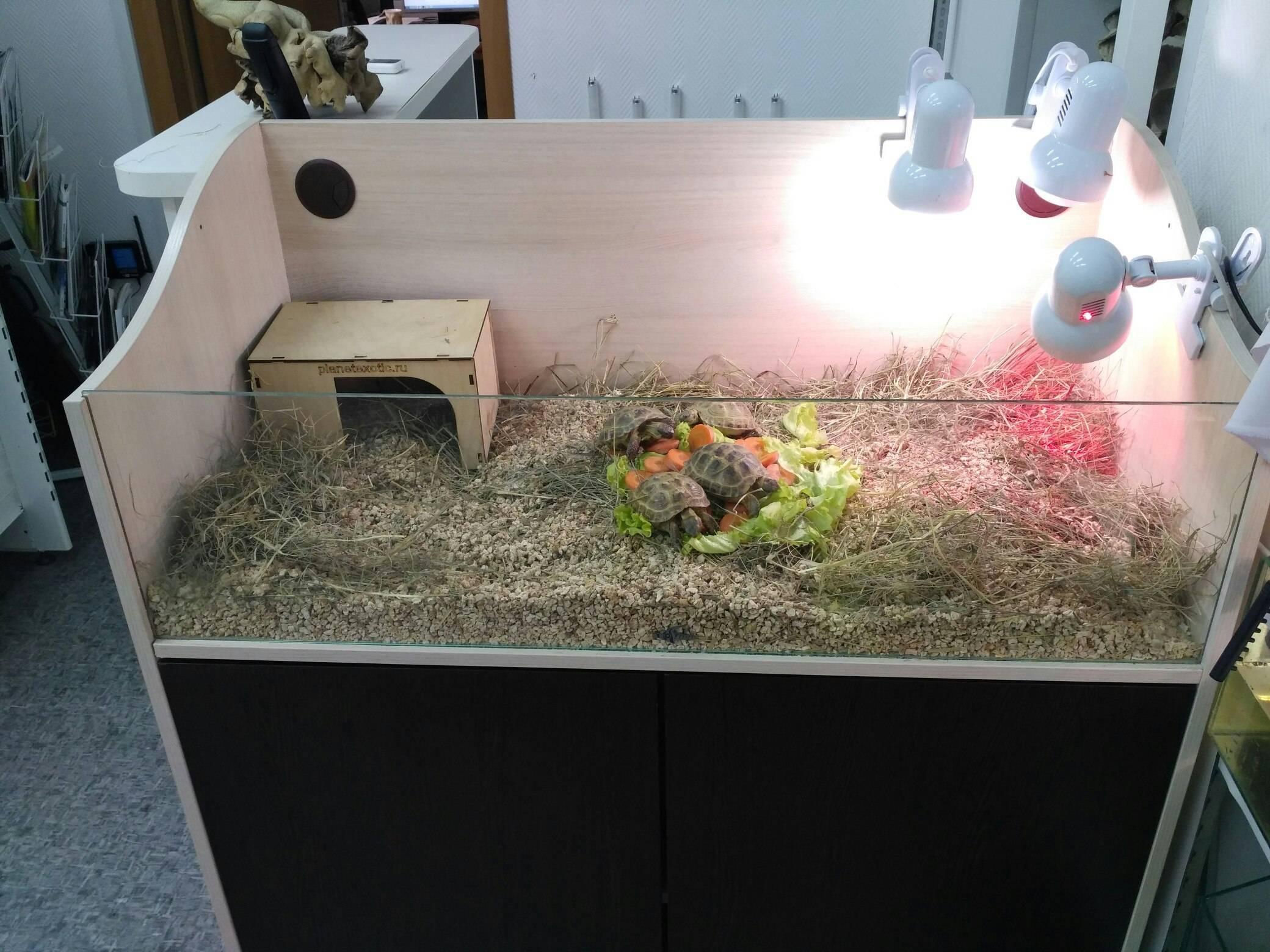 Террариум для сухопутной черепахи — вопросы и ответы