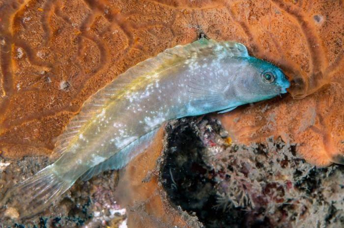 Когда и как спят аквариумные рыбки?