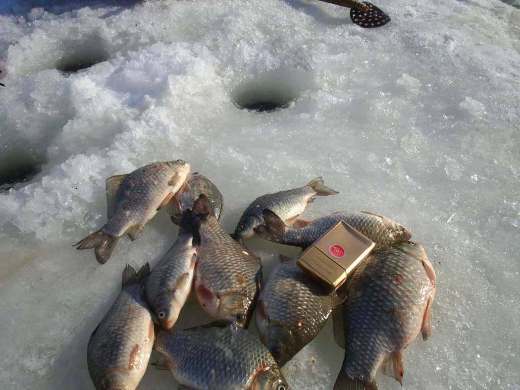 Рыбалка на хопре: какая рыба водится, где лучше ловить