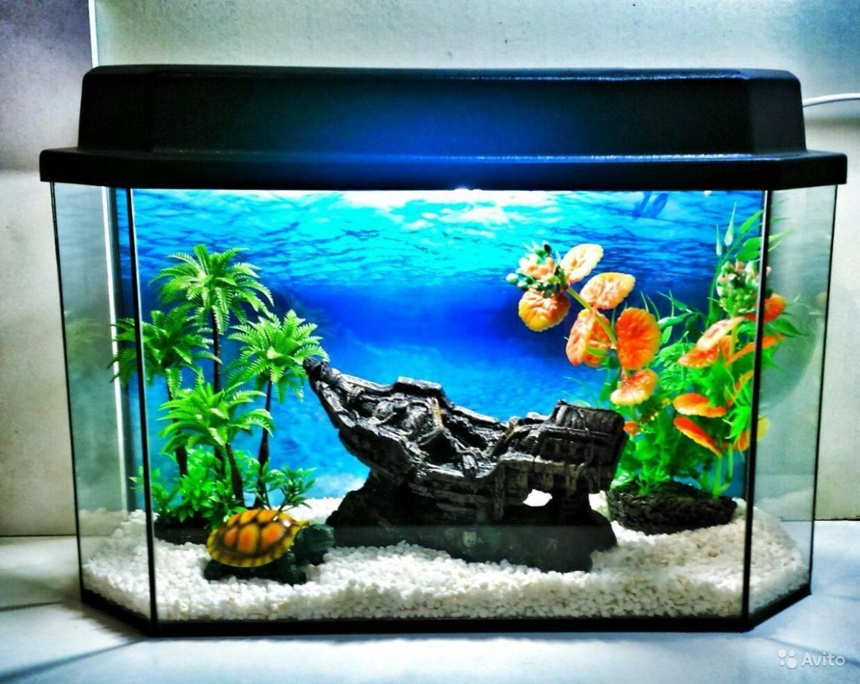 Что нужно для аквариума начинающим