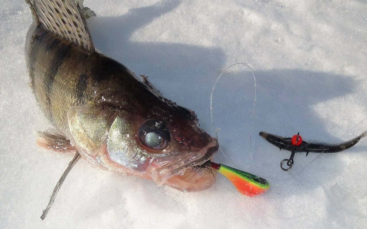 На что ловить голавля? лучшие наживки и приманки для рыбы