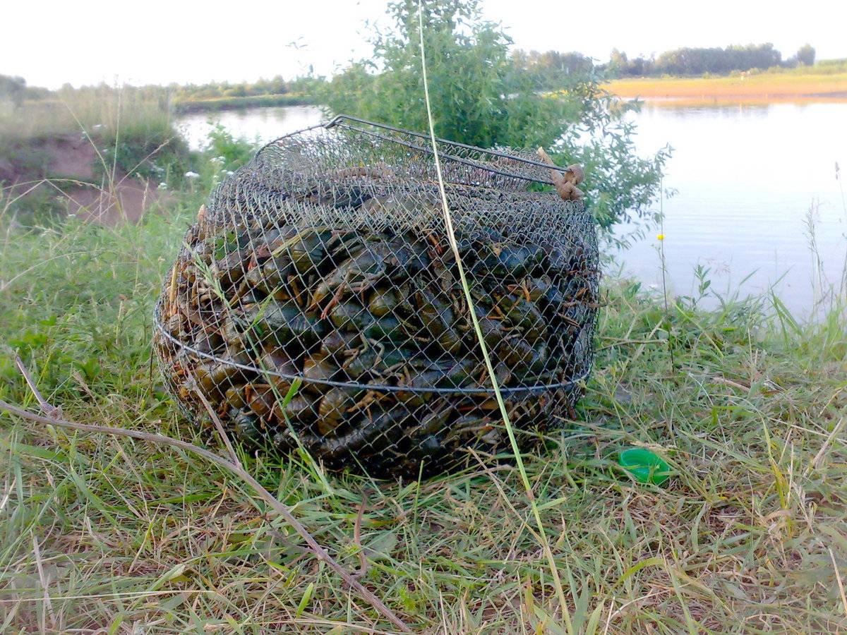 Как ловить раков в октябре: раколовка и удочка