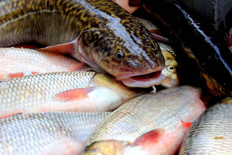 Места для рыбалки в новосибирской области – платная и бесплатная рыбалка!