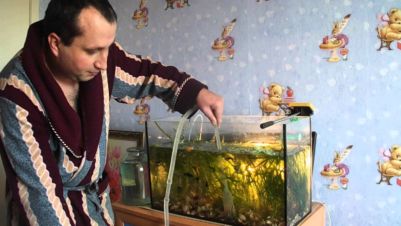 Как почистить аквариум: 8 шагов для правильного мытья