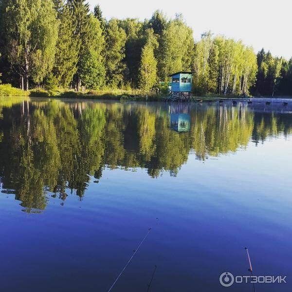 """Платный пруд """"хомяково""""   отзывы о рыбалке и отдыхе"""