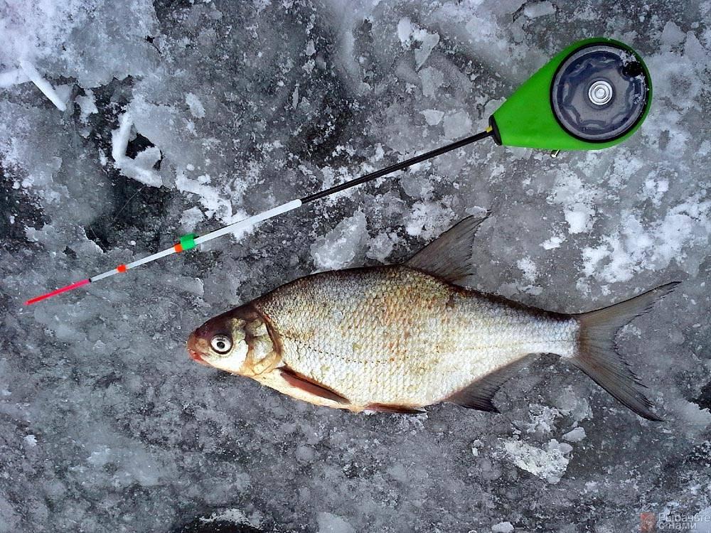 Рыбалка на плотву и подлещика в феврале: где ловить, на что ловить и чем прикармливать февральскую плотву и подлещика