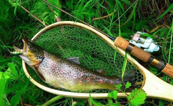 Ловля форели на спиннинг: на платниках, ручьях и озерах