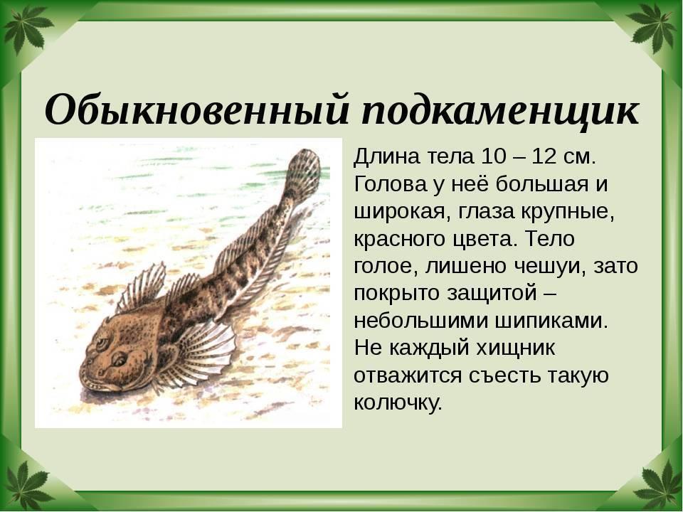 Уж обыкновенный - описание, фото, среда обитания