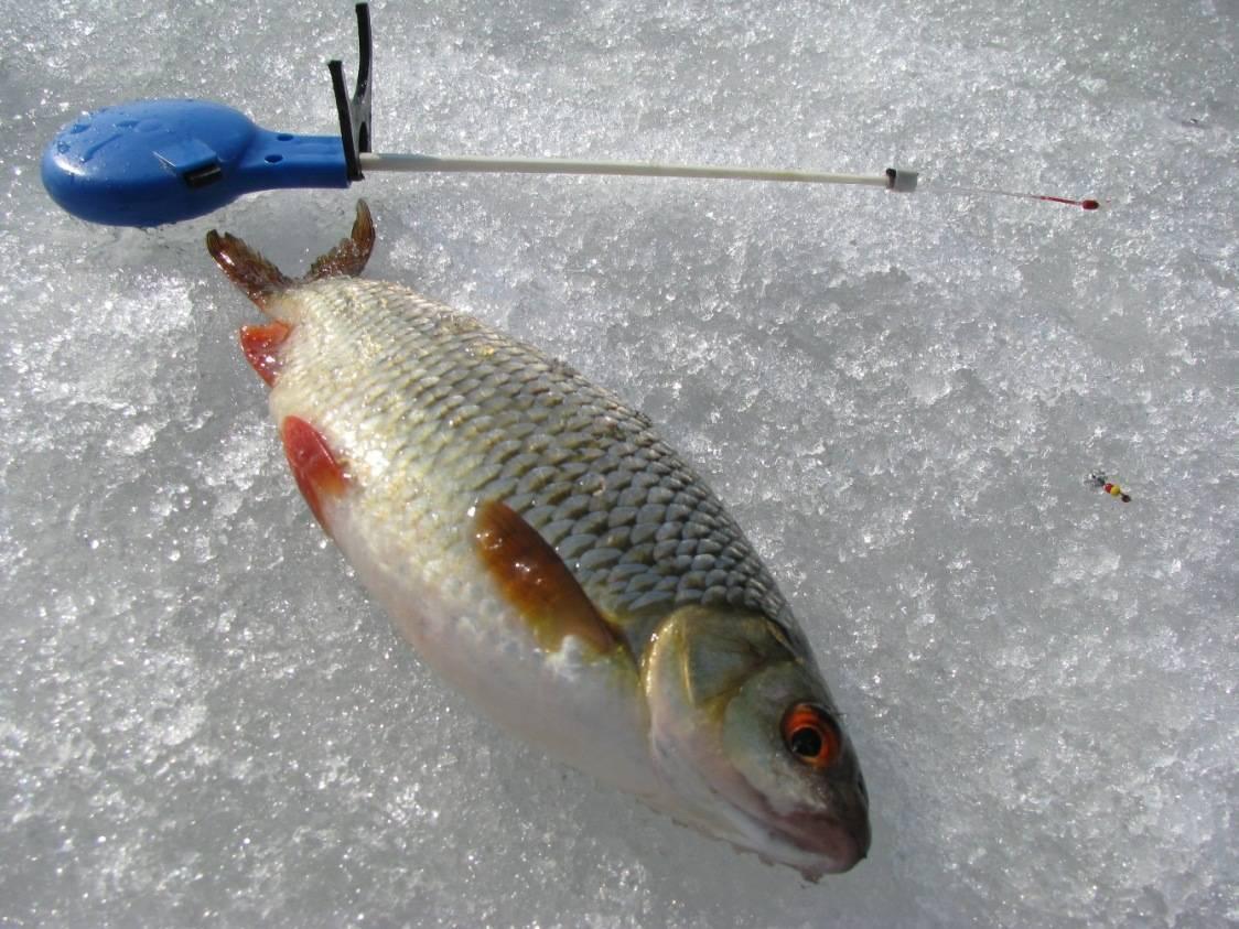 Как эффективно ловить на мормышку зимней удочкой — основные правила игры мормышкой
