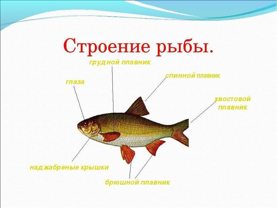Чем питаются рыбы наших рек: как влияет их рацион на строение тела, на выбор снастей