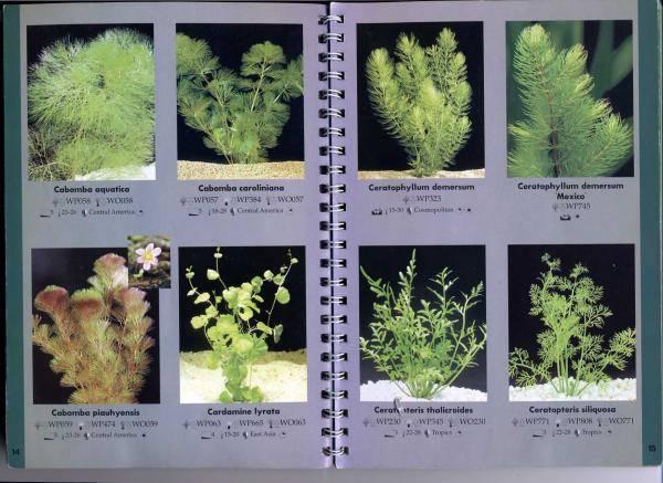 Аквариумные растения - названия,виды,фото,описание   аквариумные рыбки