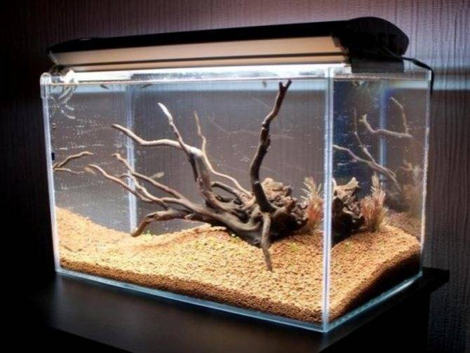 Коряга в аквариуме своими руками:выбор,подготовка,обработка