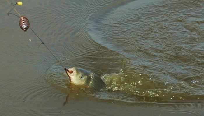 Ловля карпа на поплавочную удочку: секреты рыбалки, как ловить на снасть летом