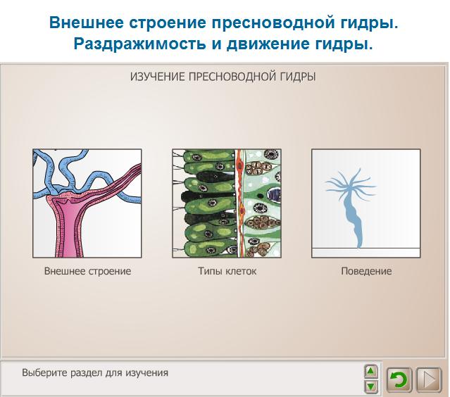 Форма размножения гидры пресноводной. движение, размножение и питание пресноводной гидры - про здоровье