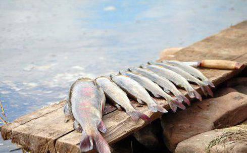 Река кама, подробное описание, рыбалка, отдых, сплавы и круизы