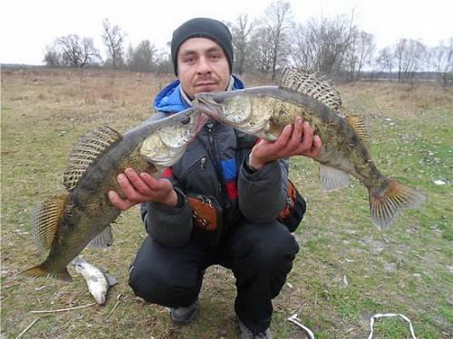 Рыбалка на реке десна московской области