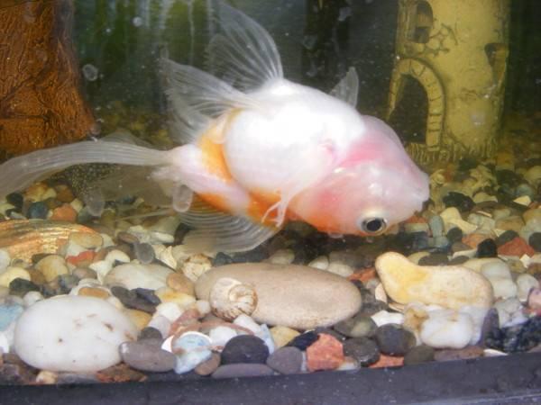 Почему рыбка плавает на боку, вверх головой на поверхности или на дне