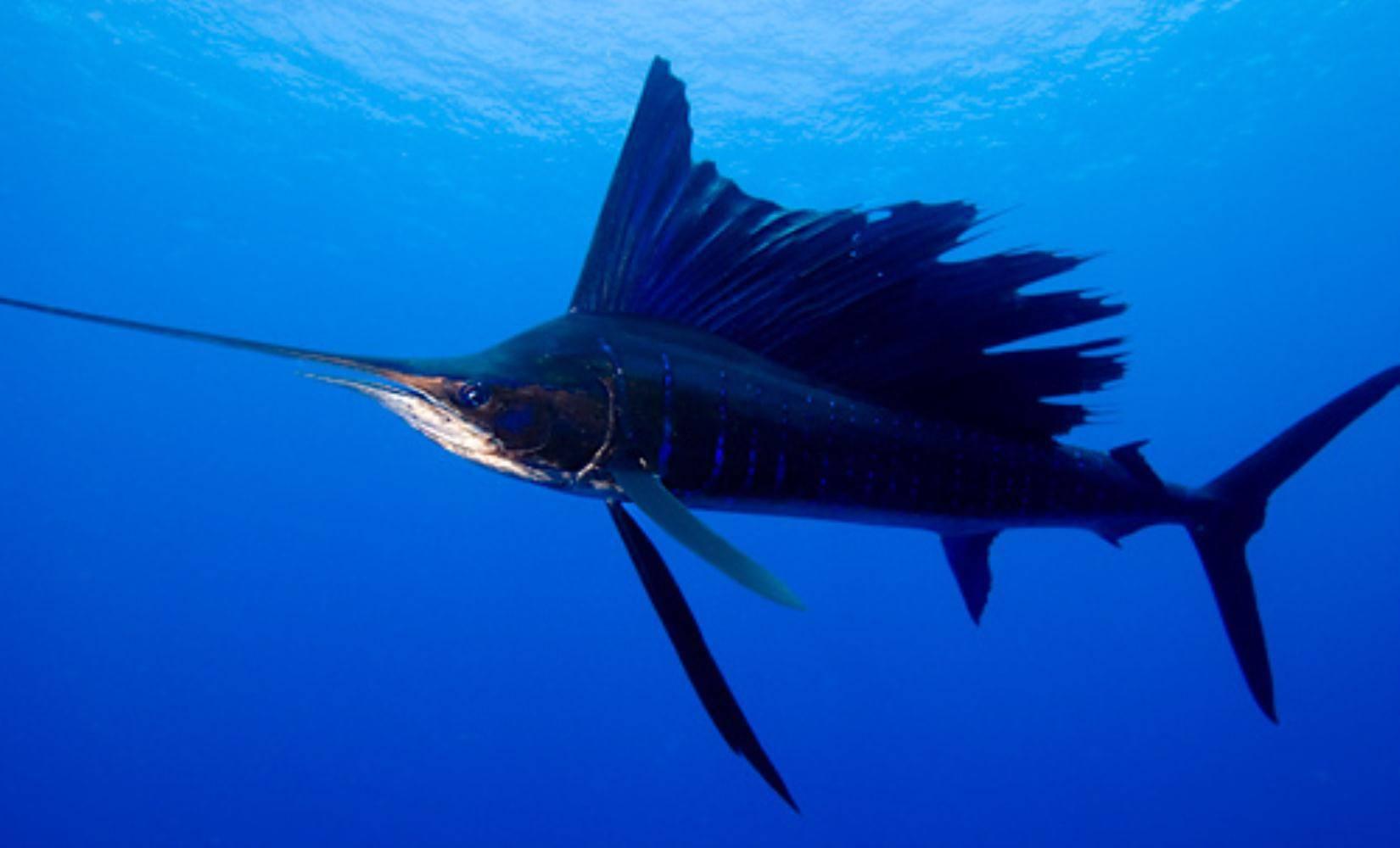 Как плавают рыбы? описание, фото и видео - «как и почему»