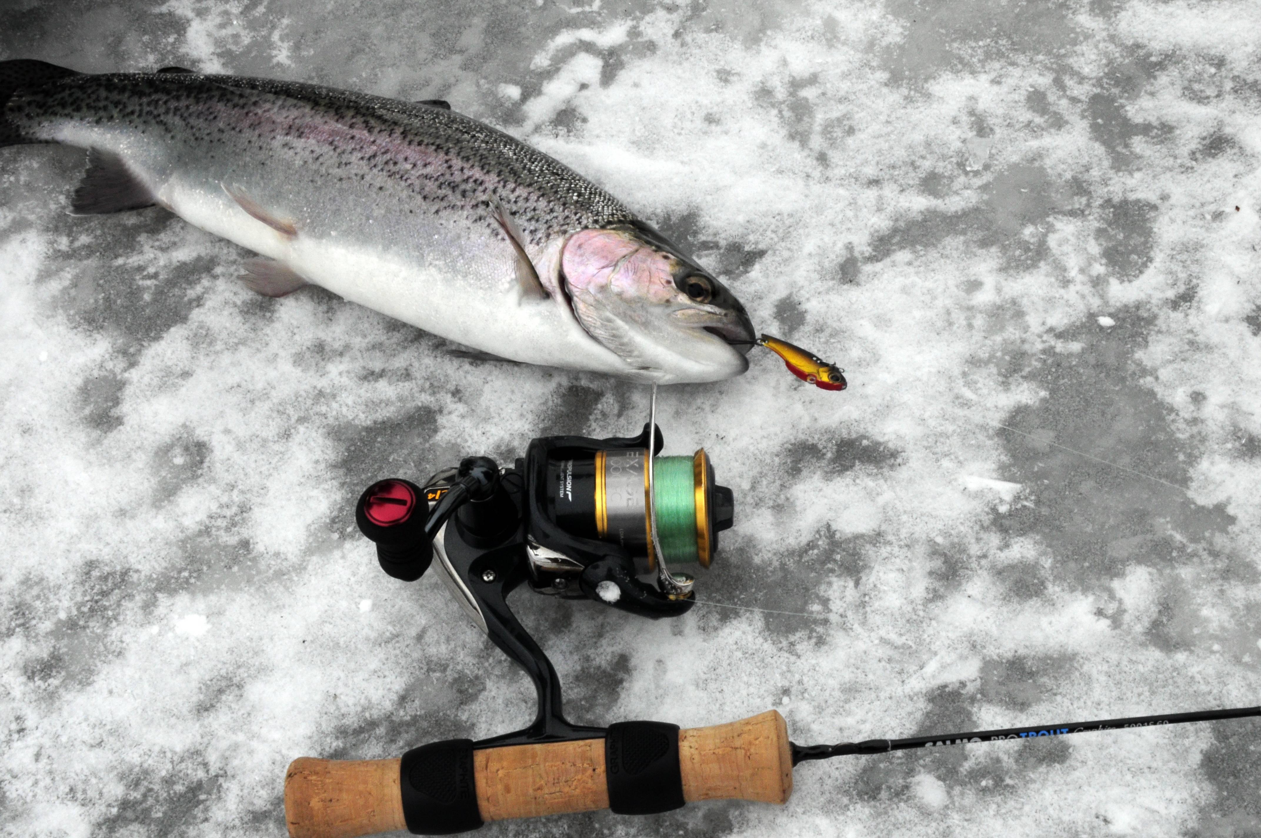 Рыбные места и промысловые виды рыб кольского полуострова