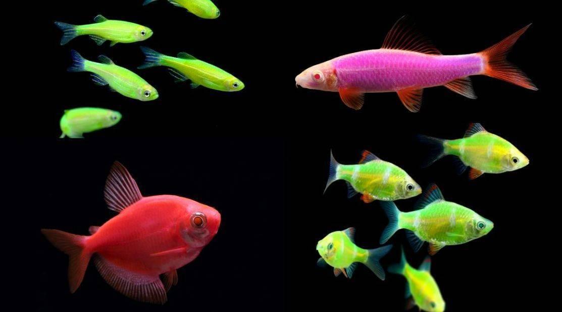 Виды аквариумных рыб с фото и описаниями, особенности ухода