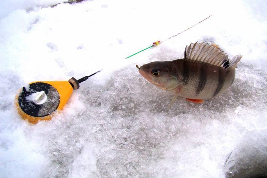 Рыбалка на безмотылку зимой:  выбор снастей и приманки, техника ловли