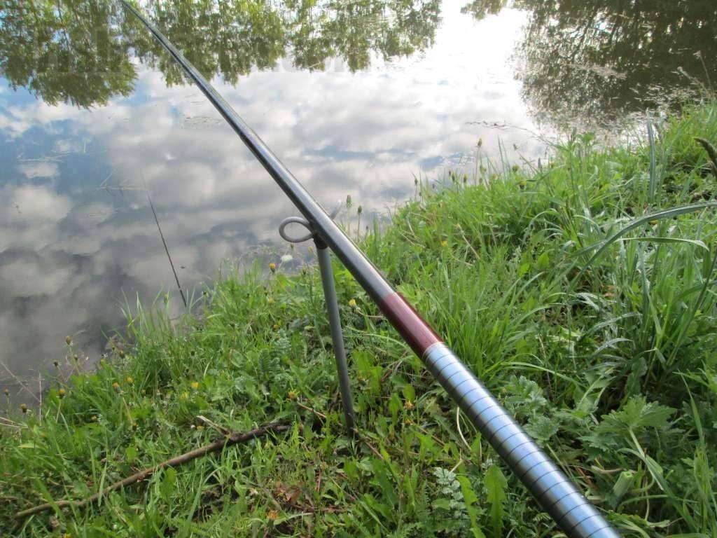 Ловля толстолобика: особенности рыбалки весной, летом и осенью