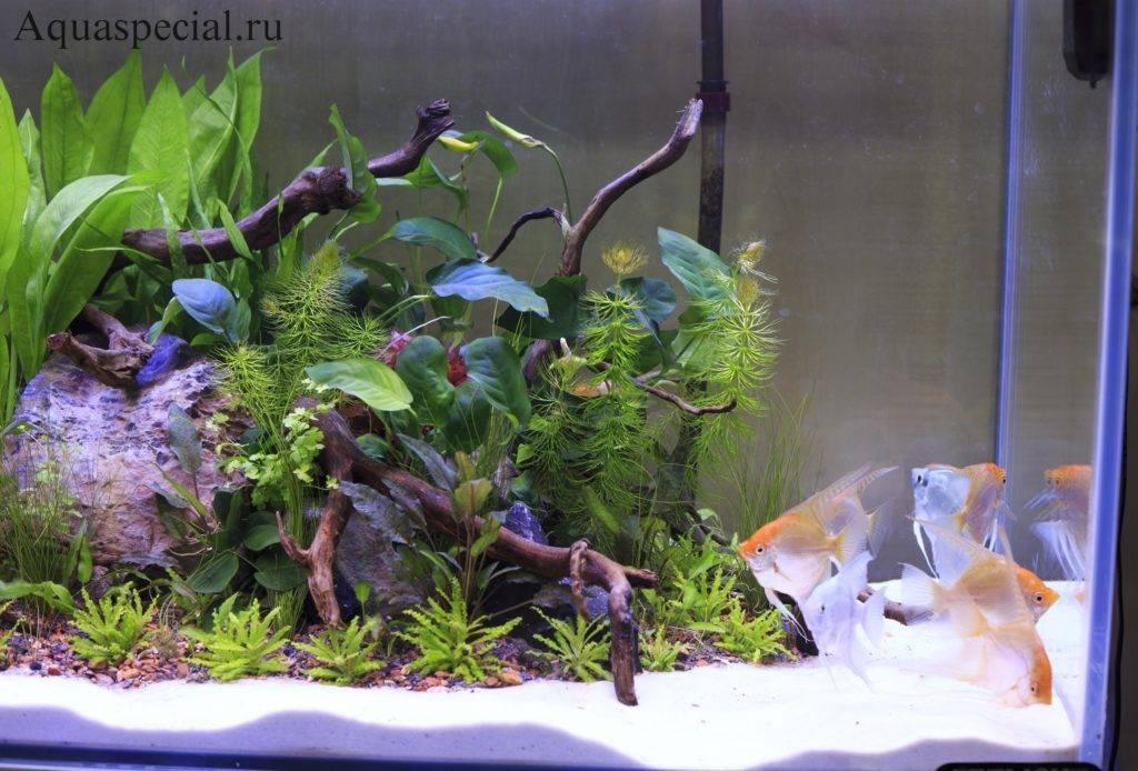 Как часто надо менять воду в аквариуме? подмена воды в аквариуме, заселение рыбами аквариум, предупреждение заболеваний, биологическое равновесие, доливка воды, полная замена старой воды, частая смена